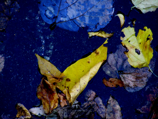 yellow-in-blue-autumn-colors-in-the-ditch-by-Raburadohl.png